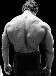 Ecto Mesomorph Bodybuilders The endomorph is the naturally athletic body type. They tend to be ...