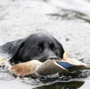 duckshoot 2